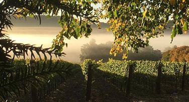 hambledon-vinyard